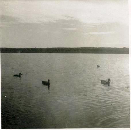 8-Chasse aux canards dans la baie de l'Ilet à Bibeau